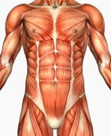 Core Muscle Training
